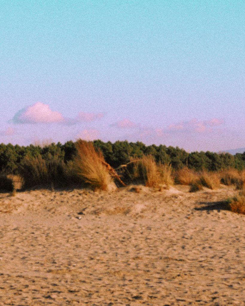 Il mare alla fine della Pineta di Levante