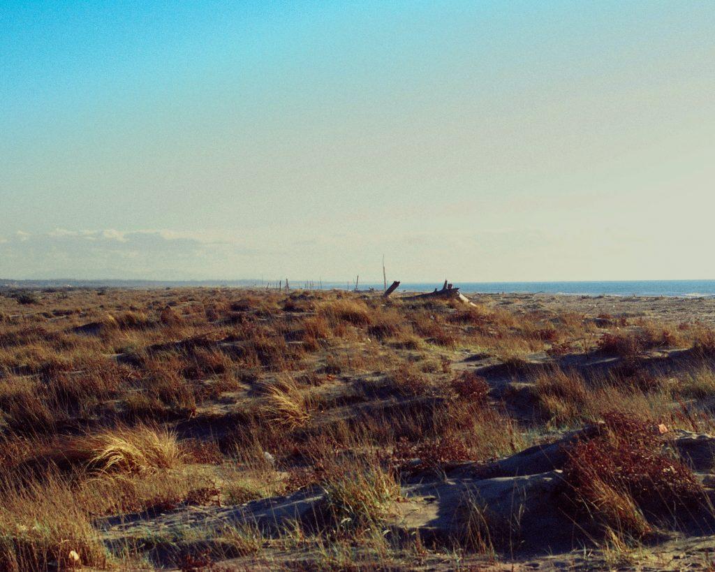 Il Mare dalla Pineta